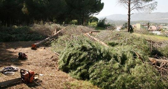 Demre'de Bakanlık onaylı ağaç katliamı başladı.