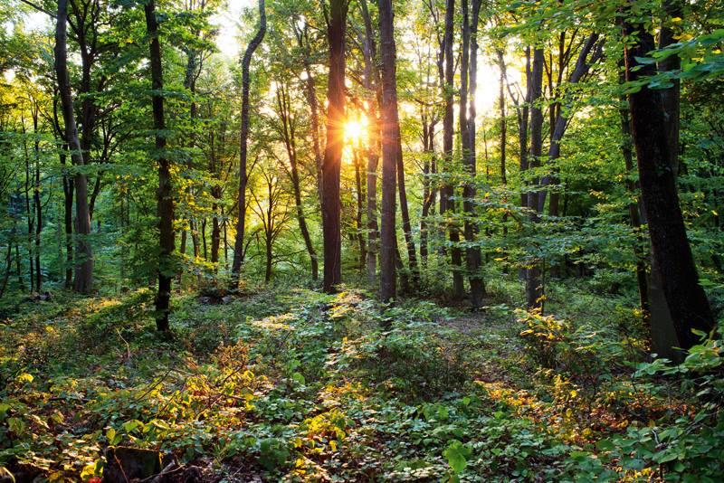 İstanbul Belgrad Ormanı Direniyor