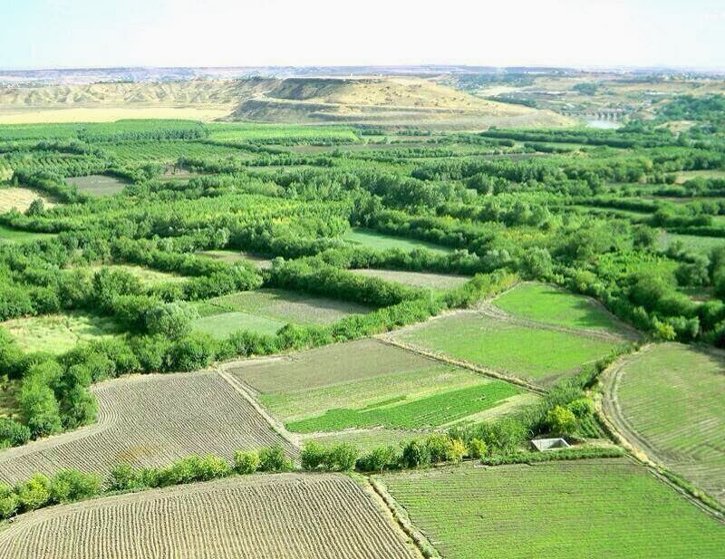 Yeşil Amed'den Hevsel Bahçeleri için mücadele vurgusu