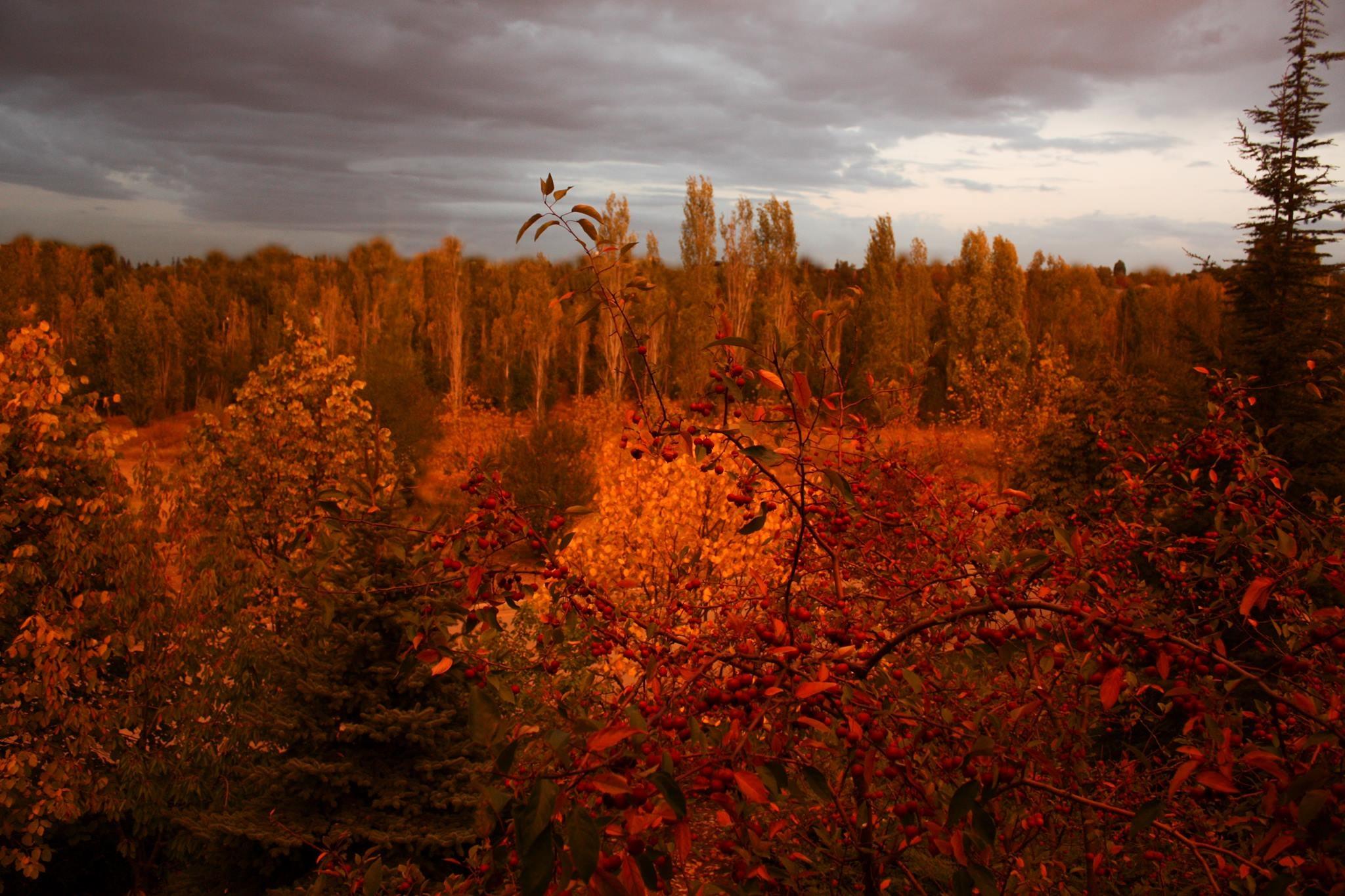 ODTÜ, Ormanlarını Genişletmek İçin Dayanışmaya Çağırıyor..