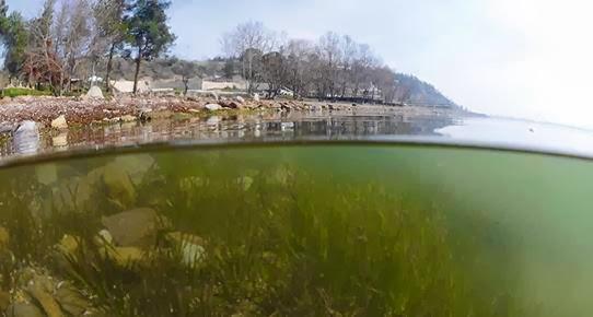 Sapanca Gölü'nde 'ötrofikasyon' başladı