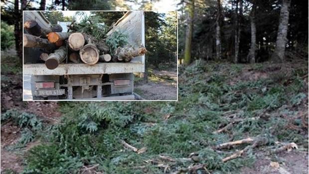 Bolu'da Ağaç Katliamı