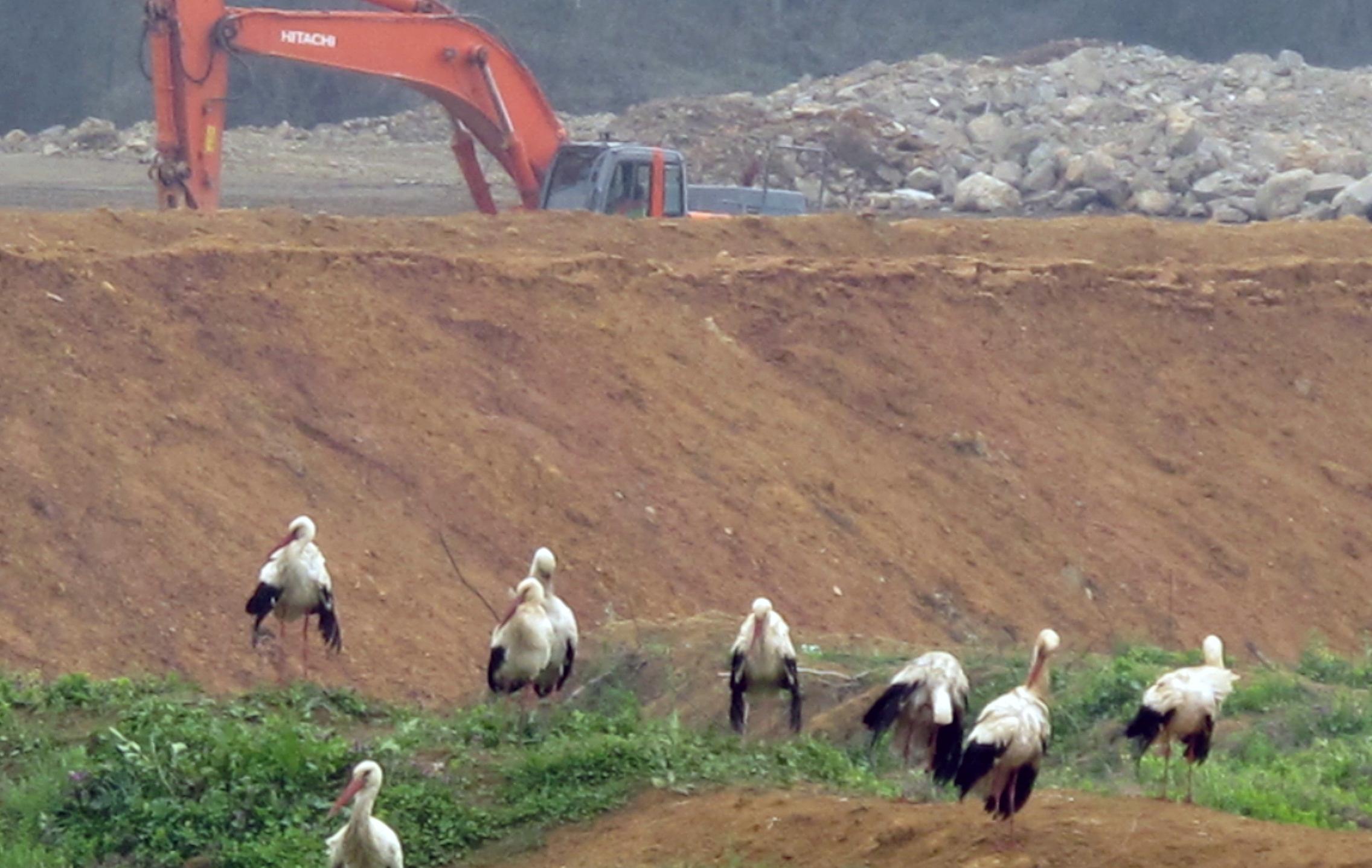 Doğa tahribatı göçmen kuşları tehdit ediyor