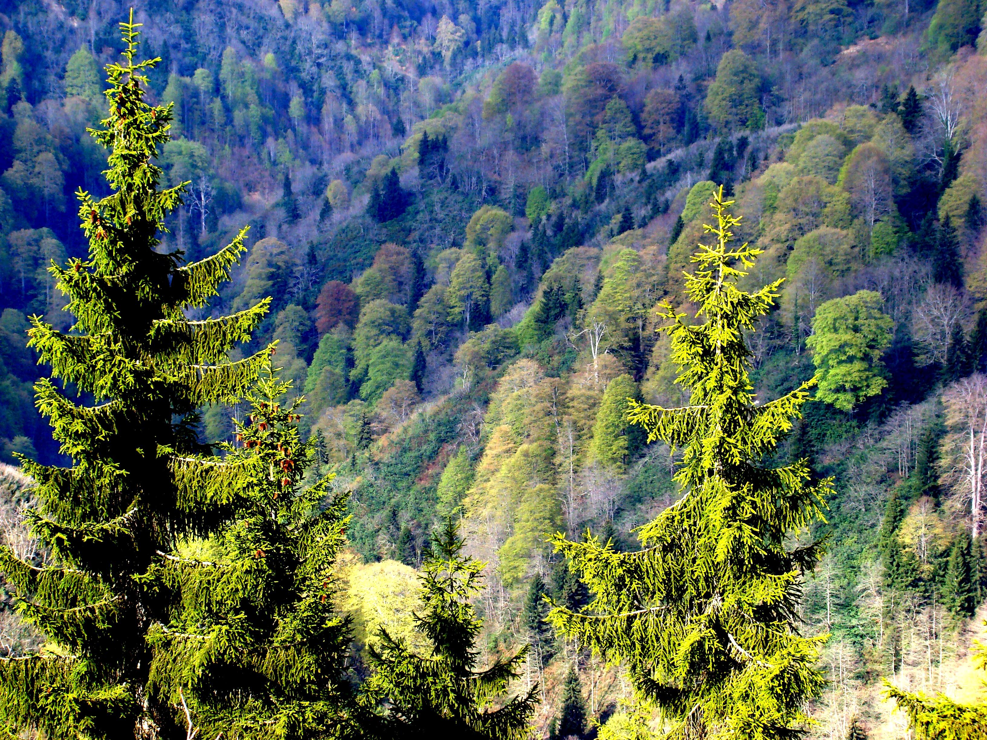 Ormanlık alanlar işletmelere açılıyor
