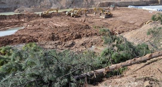 Macunköy'de ağaçlarla birlikte güvercinleri de katlettiler