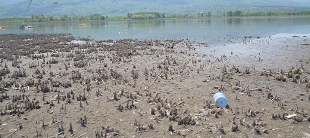 Su Park kuraklığa yenildi