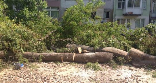 Bakırköy'de Marmaray için ağaç katliamı