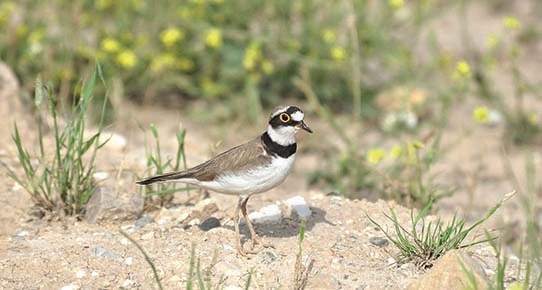 Kuşlar ve Anadolu'dan geçme hakları