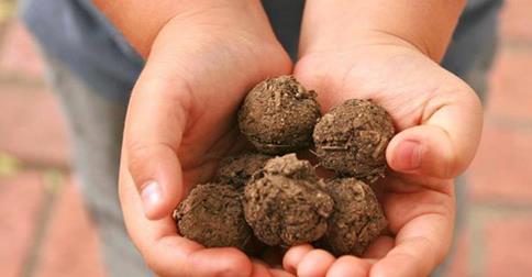 Özgür ve Temiz Gıda İçin Yaşasın Yerel Tohumlar!