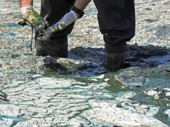 Çevre Bakanlığı, Bafa'daki manzarayı olağan buldu