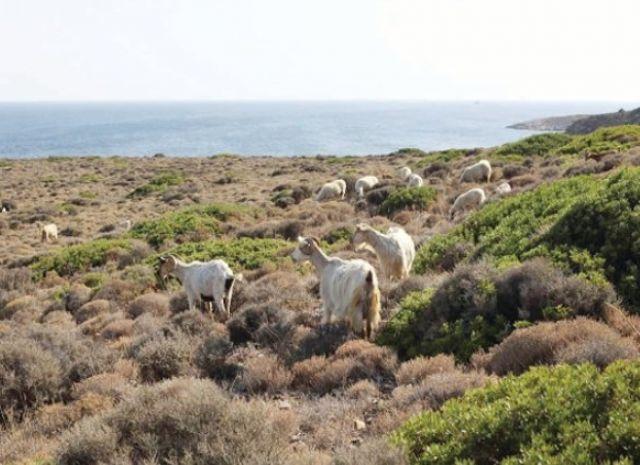 Bozcaada'da ekolojik film festivaline doğru