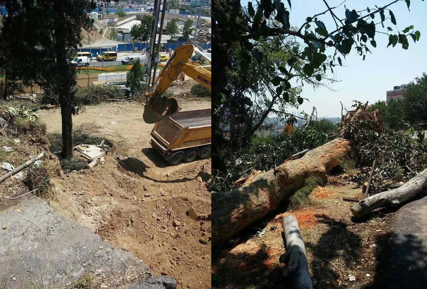Otopark için ağaç katliamı