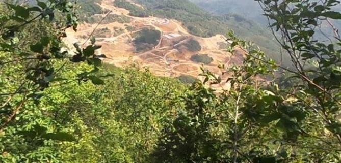 Binlerce ağaç maden kurbanı