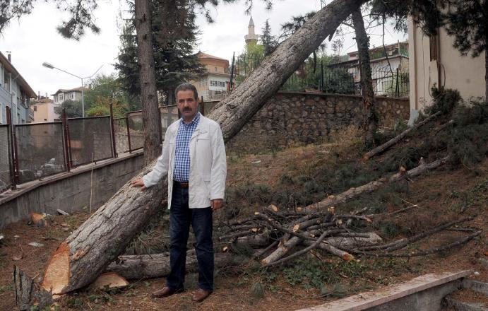 80 yıllık ağaçları katlettiler