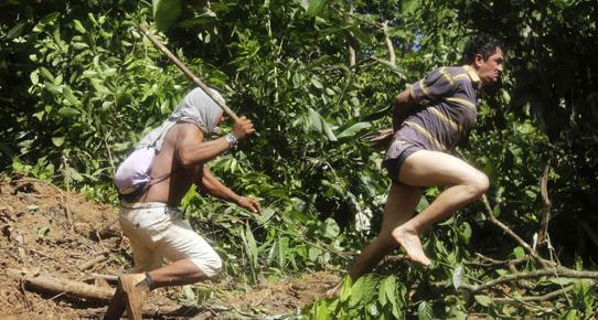Amazon yerlileri ağaç kesenleri dövdü!