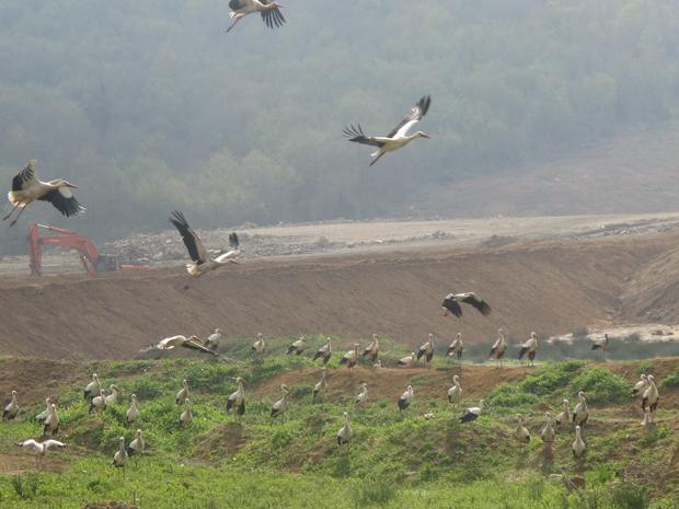 3. Havalimanı ve kuşları göç yollarından sürmek!
