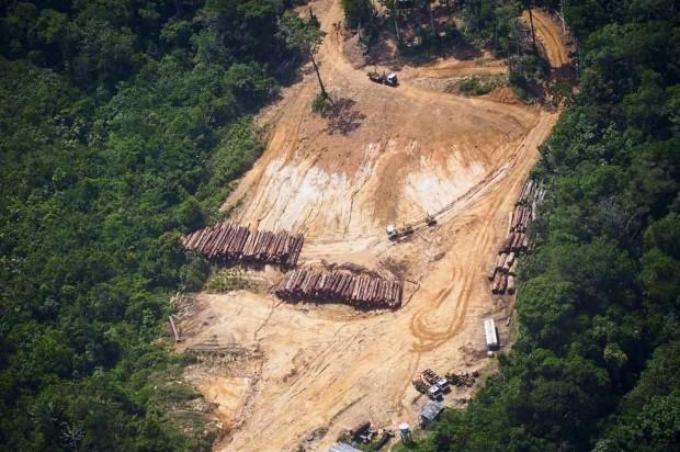 Amazon'da kaçak ağaç kesimi