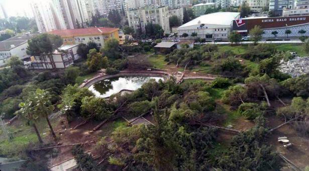Adana'da şafak operasyonuyla hastanede ağaç kıyımı
