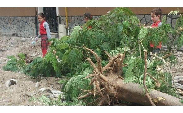 Bursa'da tepki çeken ağaç katliamı