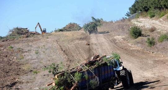 Çanakkale'nin en güzel ormanı yok oldu
