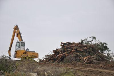 Bir ağaç katliamı haberi de Çanakkale'den…