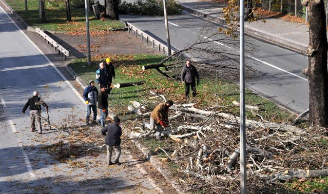 Yalova Belediyesi kavşak için 158 ağaca kıydı