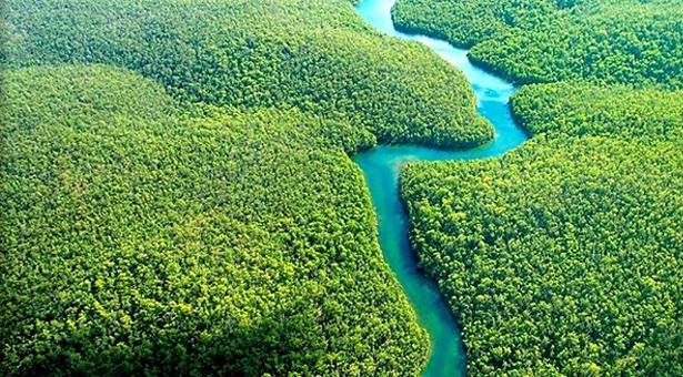 Amazonlar'da 1 ayda 24 bin futbol sahası kadar orman yok oldu