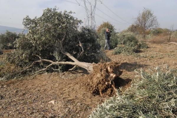 Mahkeme kararı beklenmeden 6 bin ağaç kesilip köylüler darp edildi ama Kolin'in 'işlemler'i hukuka uygunmuş!