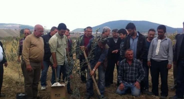 Yırca'da 6 bin ağacın katledilmesinin ardından ilk fidan dikildi, 'can suyu' verildi