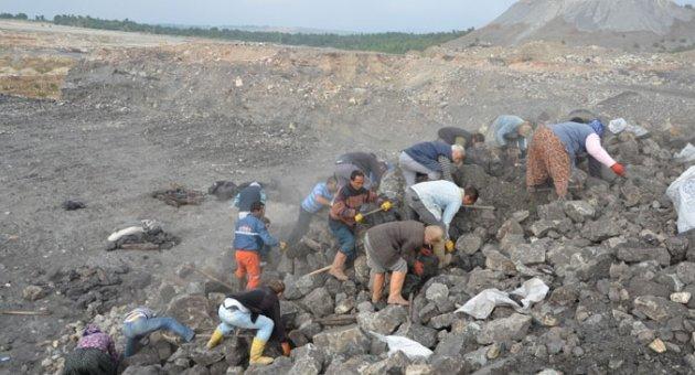 Yırca köylüleri, zeytin yerine atık kömür topluyor