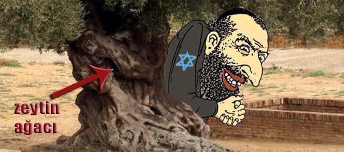 Zeytin Yahudi ağacıdır, görünce kesiyoruz!