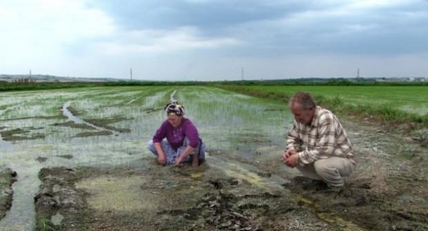 Tekirdağ'da tarım arazilerine sanayi kurulmayacak!