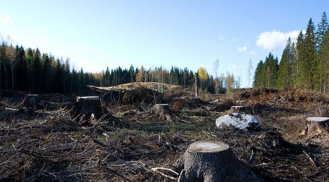 ÇED Yönetmeliği değişti, golf sahası için ağaç kesimi başladı