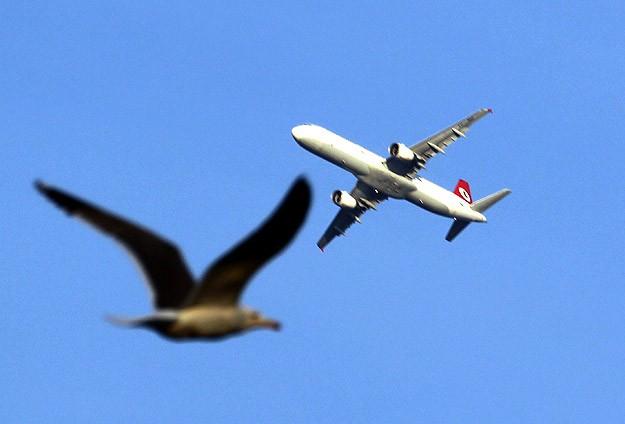Atatürk Havalimanı'na kuş giremeyecek