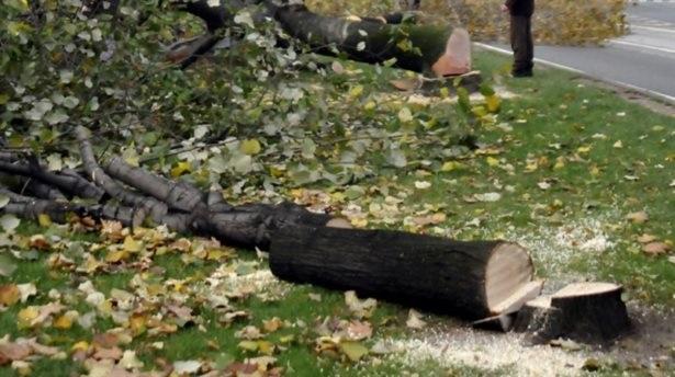 CHP Eskişehir ve Tekirdağ'da ağaç katliamı yaptı