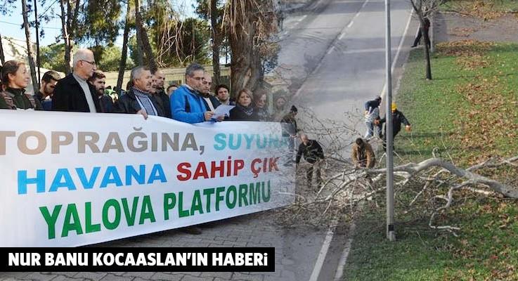158 ağacı kesen CHP'li belediyenin yeni vukuatı: Koruyu da takas etmişler