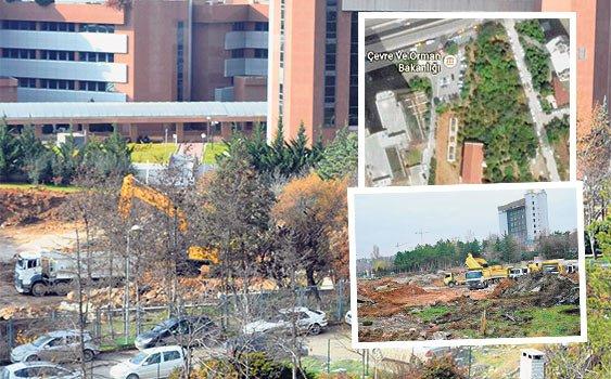 Orman Bakanlığı arka bahçesindeki 500 ağacı kesti. Kesim Sürecek!