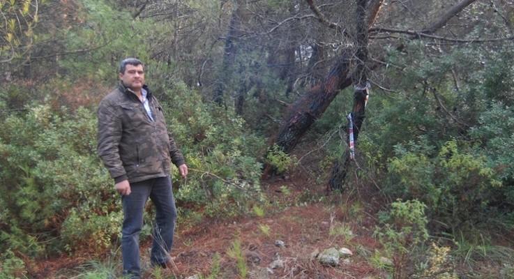 Ovacık'ta Yırca sil baştan: AKP'ye yakın Sancak Grubu 1000'den fazla ağacı kesecek