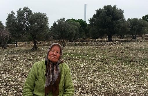 """Remziye Saatli: """"Paraları Onların Olsun, Ben Zeytin Ağaçlarımı İstiyorum"""""""