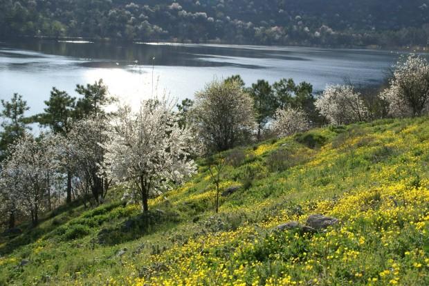 Ankaralılar Eymir Gölünde Yapılaşma Tehdidine Karşı Yarın Çağırıyor