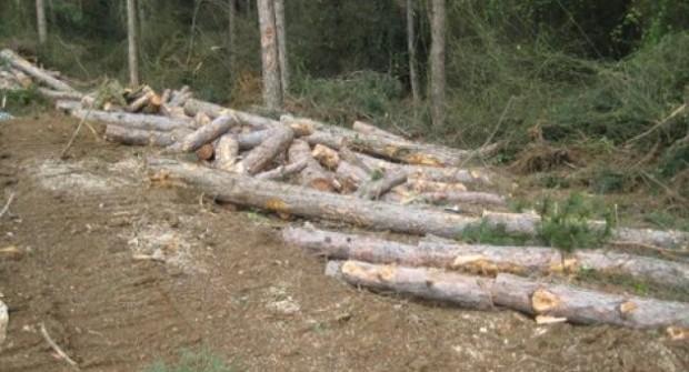 Orman Müdürlüğü Sarıyer'de Yeni Yol İçin Yüzlerce Ağaç Kesti