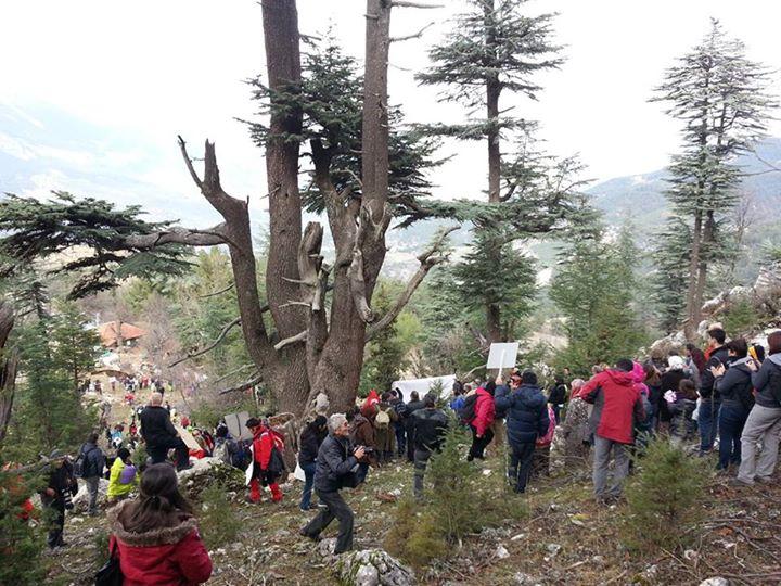 Antalya'da köylüler, asırlık sedirleri korumak için çadırlı nöbet tutuyor