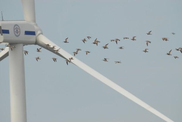 """Bunun adı RES'men katliam: """"Rüzgar santralları ormana kurulmaz. Orman da orta malı değildir""""!"""
