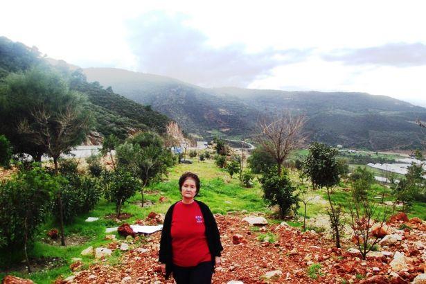 """Antalya, Yeşilköy'de suç unsuru sayılan200 ağacın """"infaz"""" edilmesine karar verildi!"""