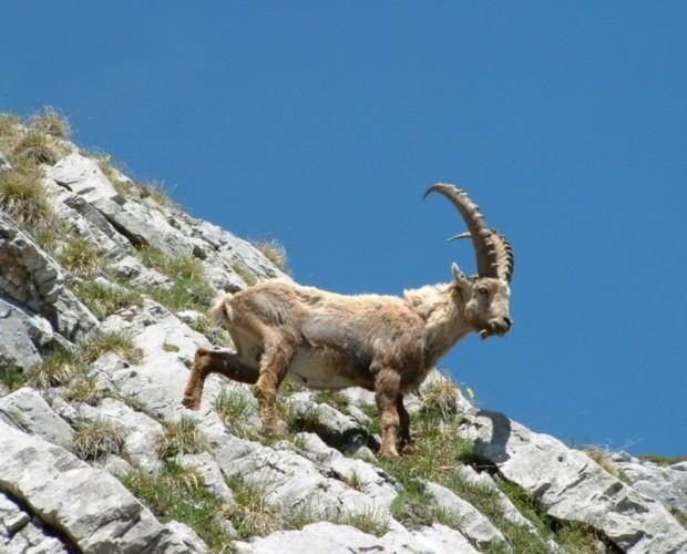 Van, Çatak'ta nesli tükenme tehlikesi altında olanhayvanlar avlanıyor!