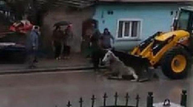 Eskişehir'de kepçe ile atılan at için harekete geçildi