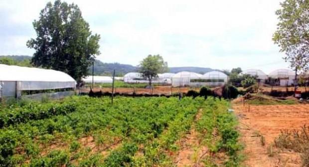 Sarıyer, Gümüşdere tarım arazileri İSKİ istilasından kurtuldu