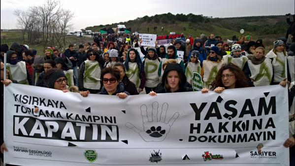 Türkiye'de tecrit ve soykırımın yeni mekanları: Hayvan barınakları