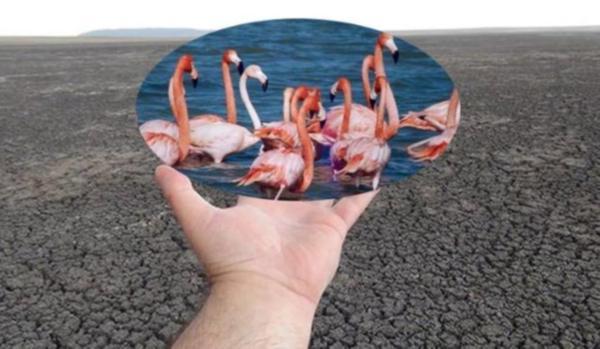 Manyas Kuş Cenneti'ni 'sanayi cehennemine' çevirecek projeyi Bakanlık onayladı!