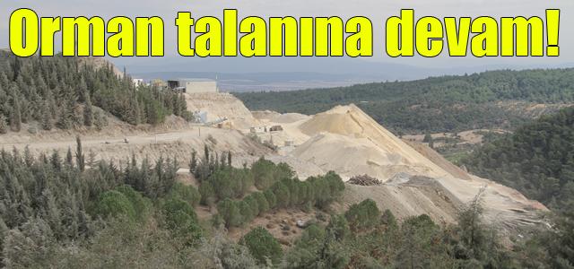 Bakanlık, belediyeye danışmadan İzmir Gaziemir'de ormanlık alanı imara açtı